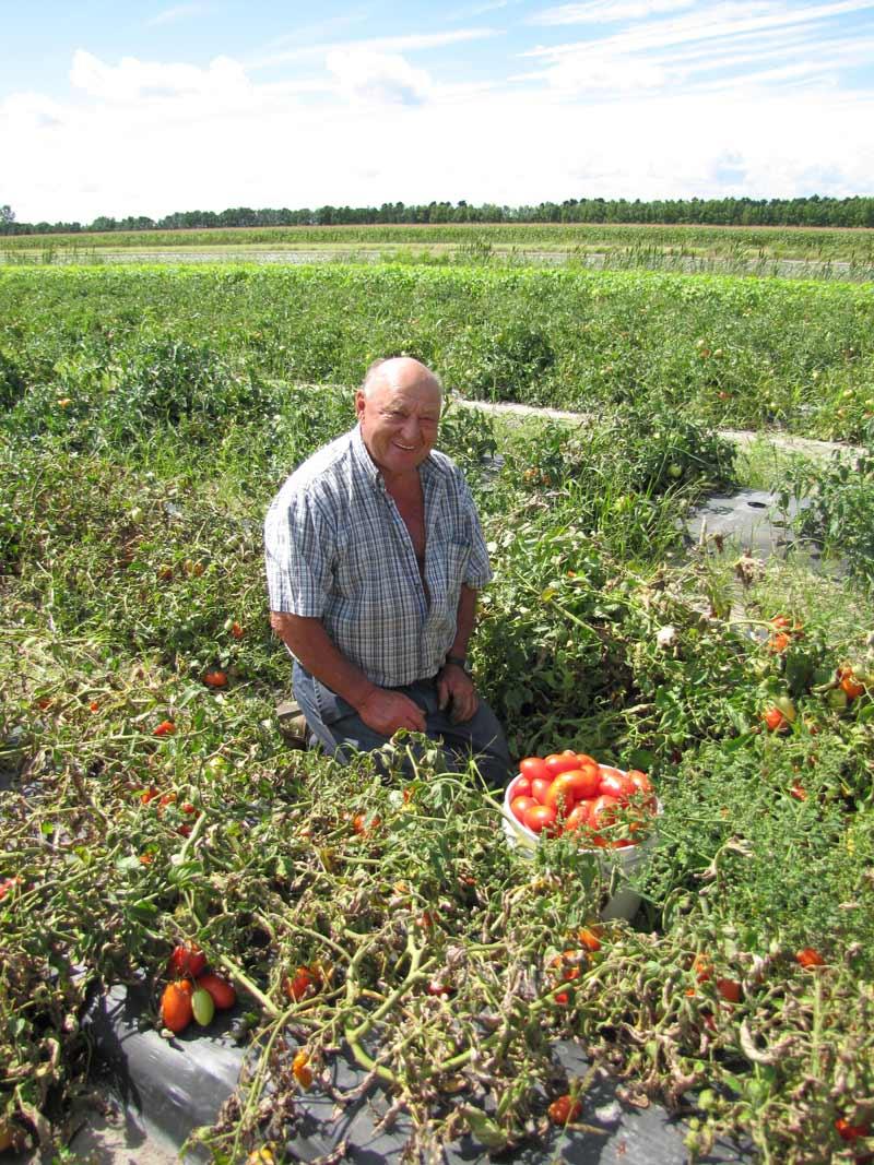 Jean-Yves, dans un champ de tomates italiennes.